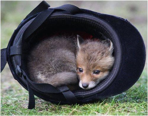 foxs-den-tack-shop.jpg