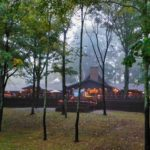 exterior-misty-trees.jpg