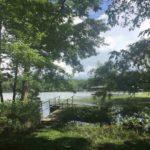 lake-view-trees.jpg