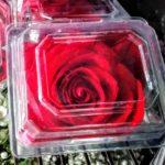 corsage-red-rose-prom-weddings.jpg