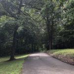 tree-lined-drive.jpg