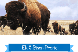 elk-bison-prarie-at-lbl